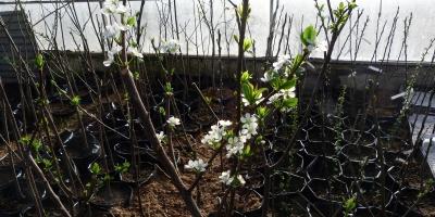 Земля раздора: что растет наполях Тимирязевской академии