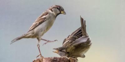 Баталии науроках: как разрешить конфликт сучителем