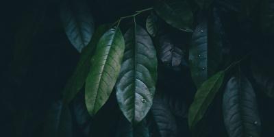 ВНовосибирске обсудят проблемы озеленения городской среды