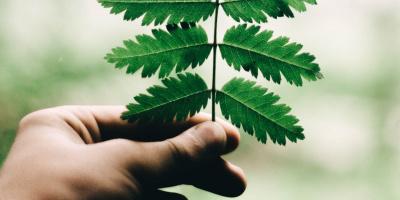 ВСВФУ начнут готовить магистров поклеточным биотехнологиям
