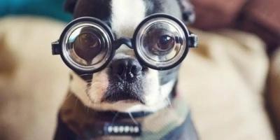Собаки сорвали уроки вКоми