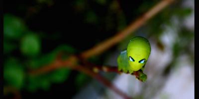 Зеленые человечки против ученых: встране растет недоверие кнауке