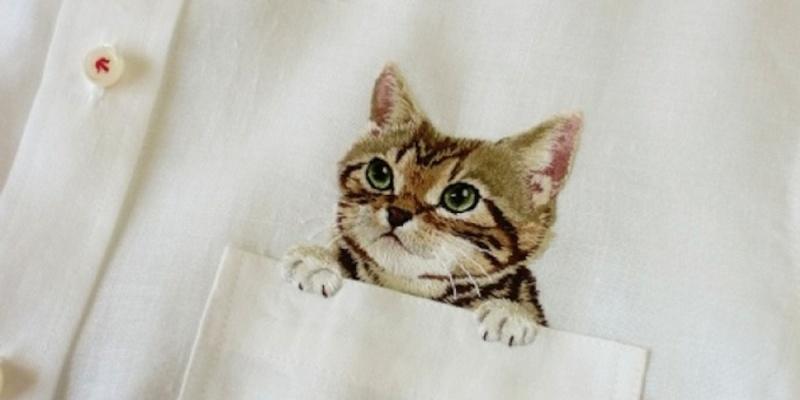 «Котики уходят, контент остаётся»