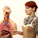 Занятие по анатомии человека ведет к.б.н. Сысолятина Елена Владимировна.